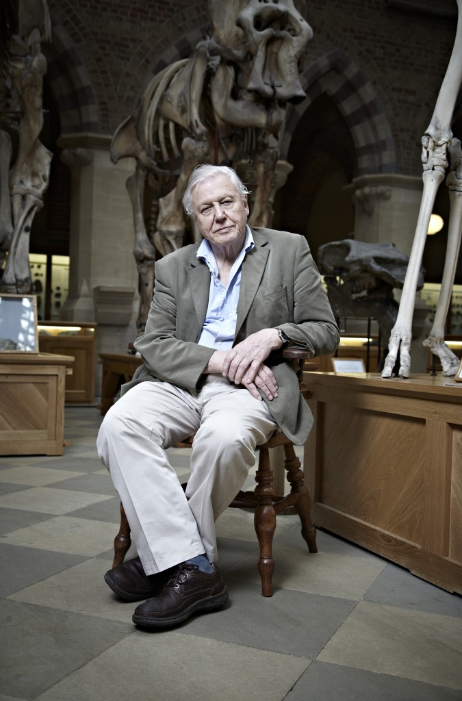 David Attenborough's Natural Curiosities, new & exclusive, on Eden from Tuesday 29th January (Sky 532 / Virgin 208/ Also available in HD)