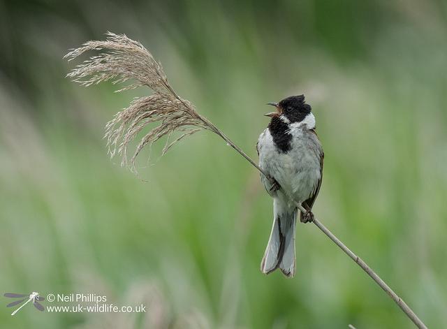 UK Wildlife Blog – UK Wildlife