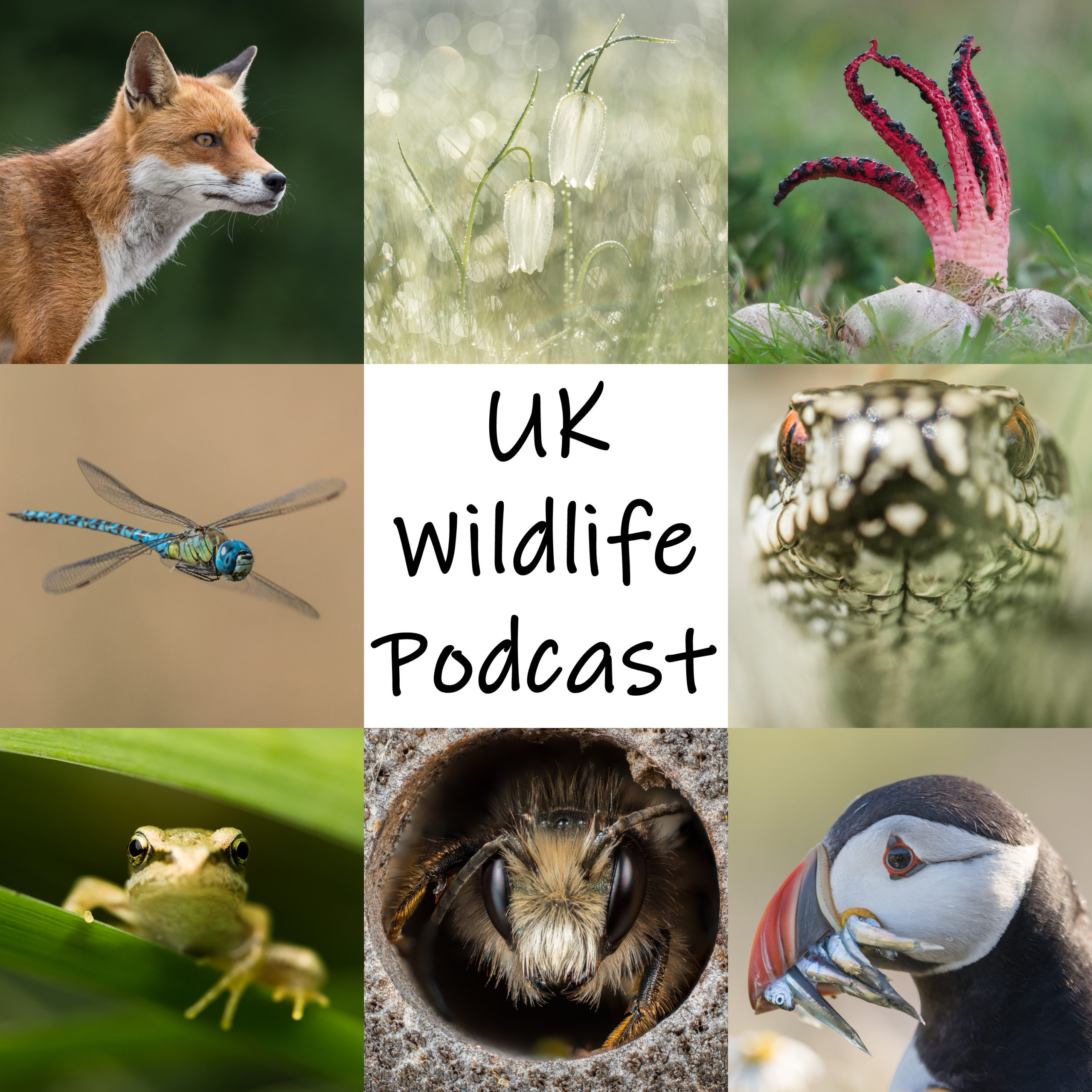 UK Wildlife Podcast